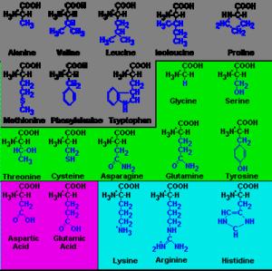 Qué Son Los Aminoácidos Química Y Algo Más